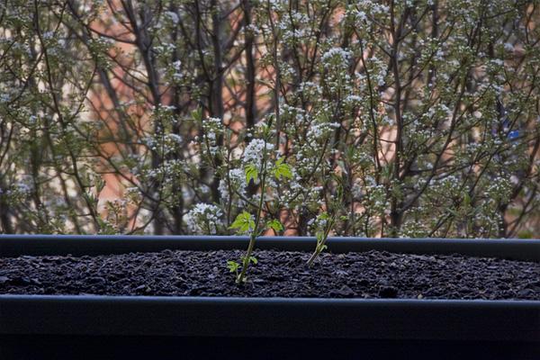 springtime hops